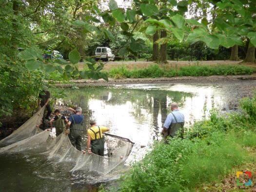 Vissen In Vijver : Verwijderen vissen uit vijver kasteellaan haelen hallo online